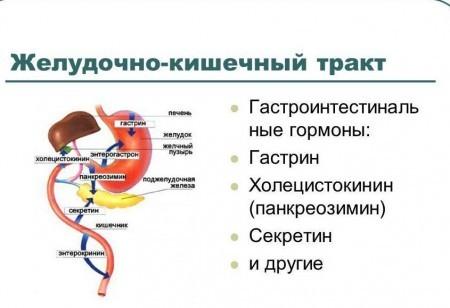 Гормоны, выделяемые в желудке