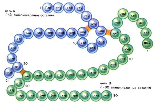 Тиреотропный гормон (TSH) | Анализы на EUROLAB