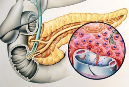 Инсулин вырабатывает поджелудочная железа