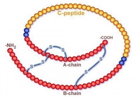 Формула С пептида