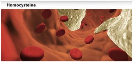Гомоцистеин - важный маркер здоровья