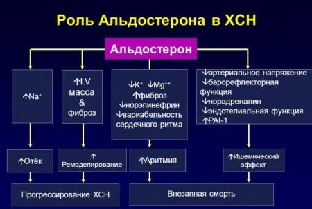 Функция альдостерона