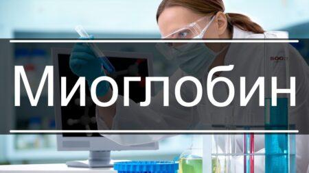 Что такое миоглобин?