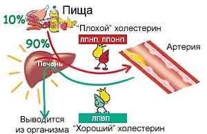 Препараты для удаления холестерина