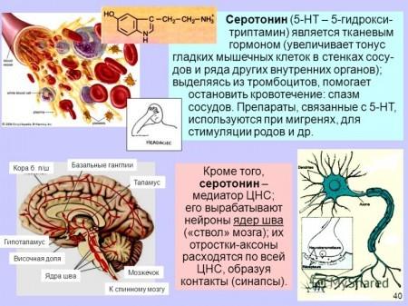 Вся информация о серотонине