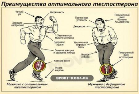 Роль тестостерона у мужском организме