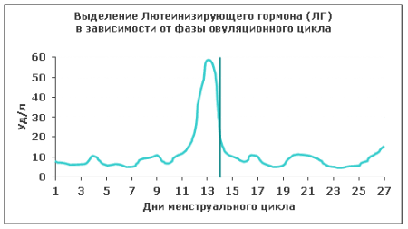 Смена уровня ЛГ в зависимости от цикла