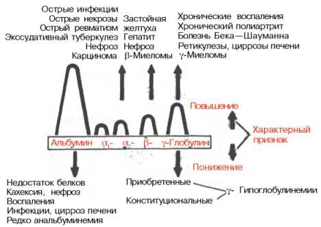 Электрофорез белка анализ крови Санаторно-курортная карта для детей 076 у Молодежная