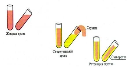 Схема получения сыворотки крови