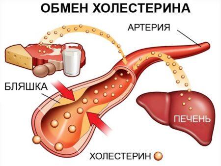 Схема обмена холестерина