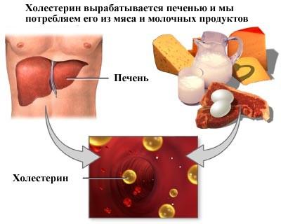 Пути образования холестерина
